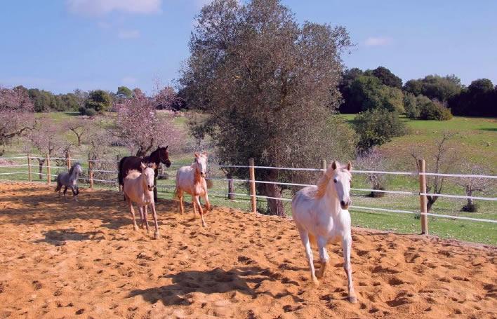 Horses at Becker Villa