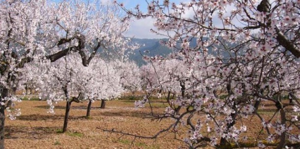 Mallorca's almond trees and almond products