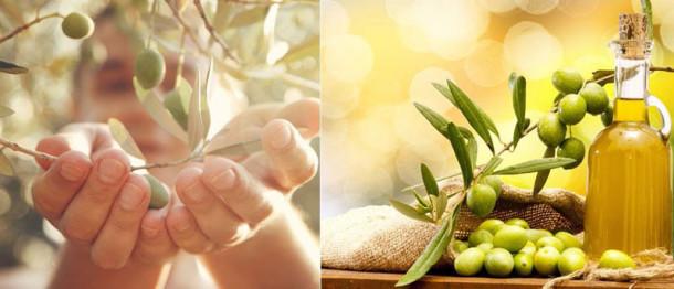 Mallorca's Olives