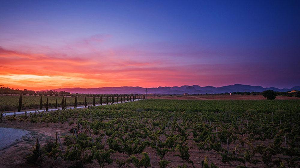 Wine making Mallorcan