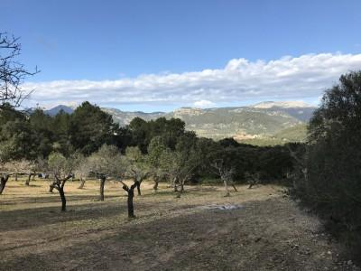 Building plot with project for sale near Campanet, Mallorca