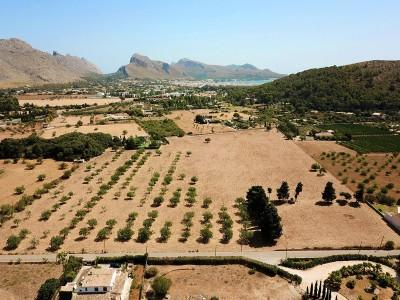 Large plot of 21.000m2 in excellent location for sale in Pollensa, Mallorca