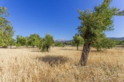 Gorgeous Mallorcan plot with serene views for sale in Campanet, Mallorca