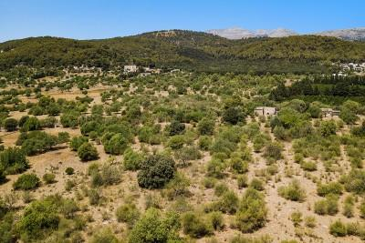 Excellent rustic plot with building license for sale in Pollensa, Mallorca
