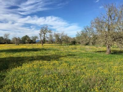 Rural plot with villa project for sale in Algaida