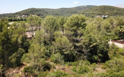 Fantastic plot for sale near Pollensa, Mallorca