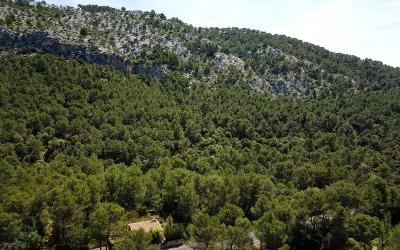 Very large plot with building licence for sale in Pollensa, Mallorca