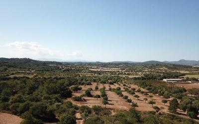 Magnificent rustic finca with mountain views for sale between Manacor and Felanitx, Mallorca