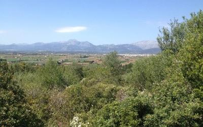 Country side plot nearby the beach in Playa de Muro, Mallorca
