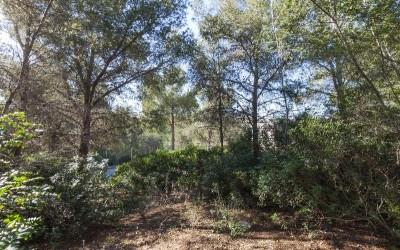 Building plots for sale in a picturesque area of Cala Vinyes, Mallorca