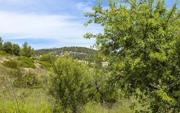 Plot of land with potential, for sale in Calvià, Mallorca